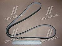 Поликлиновой ремень БМВ (производство  Contitech) 1, 3, 6DPK1697