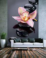 """Фото Обои """"Орхидея на камнях"""""""