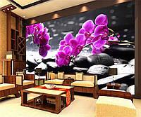 "Фото Обои ""Цветок орхидеи"""