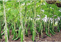 Опори для підв'язки помідор, огірків, гороху (Polyarm) Ø 8 мм (1,5 метра)