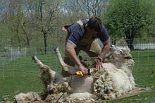 Машинки для стрижки овец (баранов).