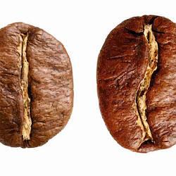 Арабика и Робуста — какой сорт кофе выбрать и в чем отличие?