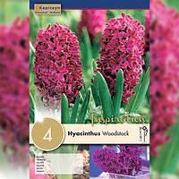 Гиацинт Woodstock (Брендовые луковицы KAPITEYN®) (Луковицы) Florium