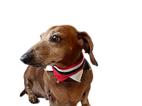Вязанный рождественский ошейник для собаки или кота