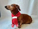 Шарф для собаки или кота декоративный, фото 2