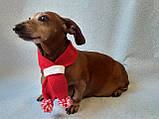 Шарф для собаки или кота декоративный, фото 3