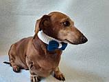 Вязанный ошейник бант бабочка для собаки или кота, фото 3