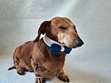 Вязанный ошейник бант бабочка для собаки или кота, фото 4
