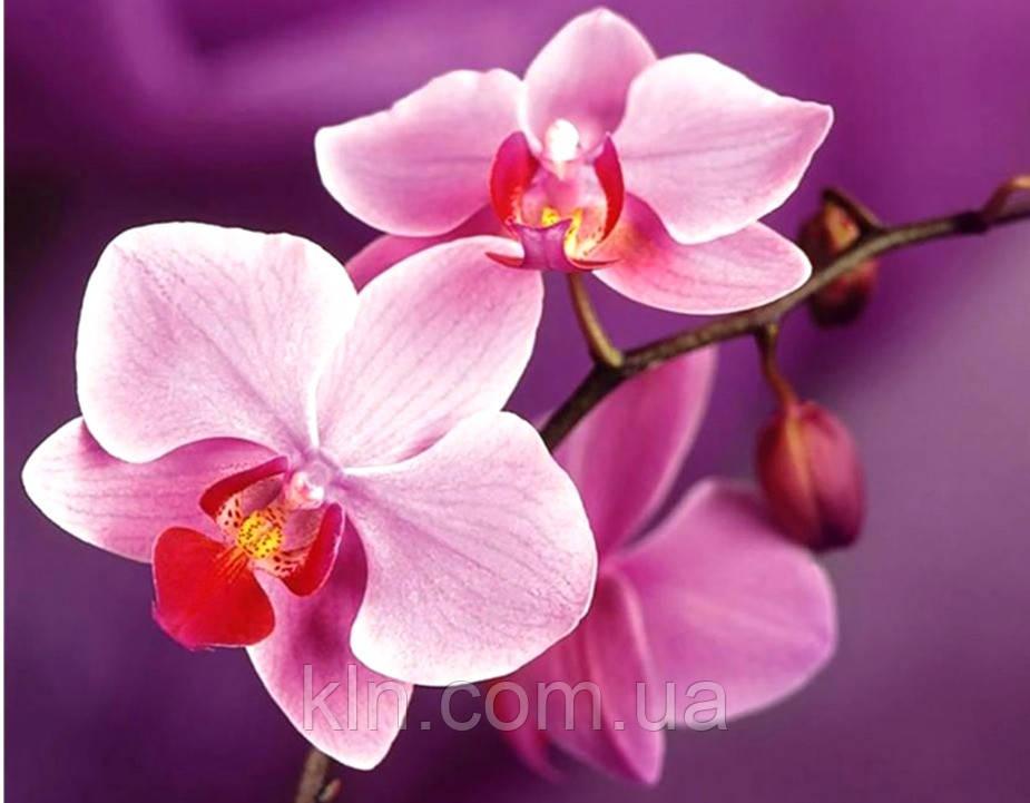 Алмазная вышивка на деревянном подрамнике 40 х 50 см Цветы орхидеи (арт. TN934)