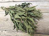Сухоцвіт кропиви натуральної , 10 шт в пучку, 15 грн, фото 2