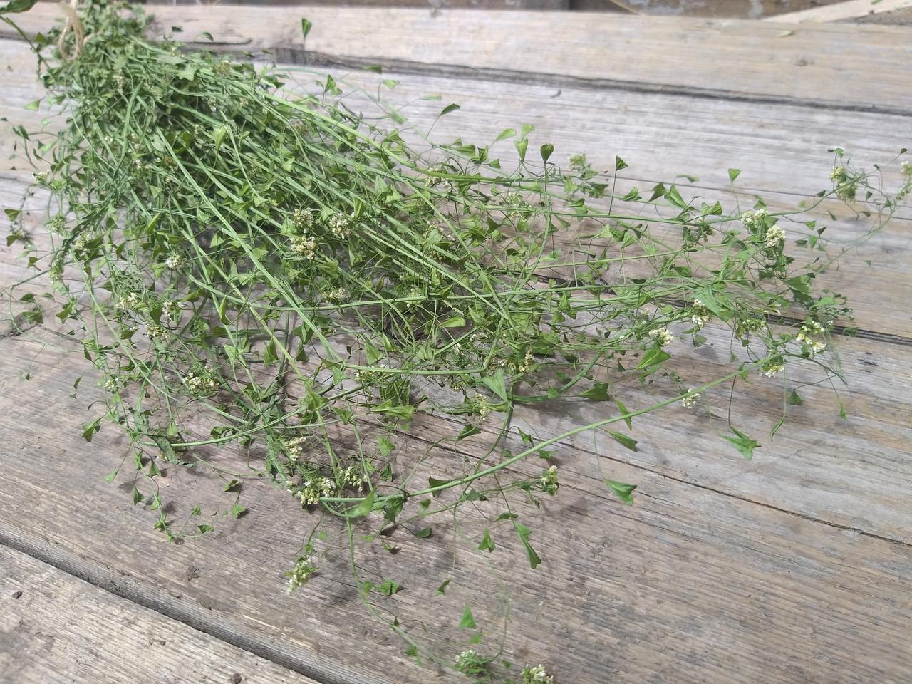 Сухоцвіт грициків Capsella (пастушья сумка), 35 см висота в'язанки, 20 грн