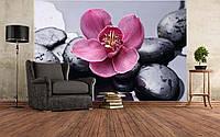 "Фото Обои ""Розовая орхидея"", фото 1"