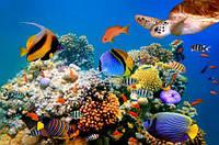 """Алмазная мозаика """"Подводный мир"""" GB70968"""