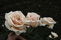 Штамб Ашрам, фото 2