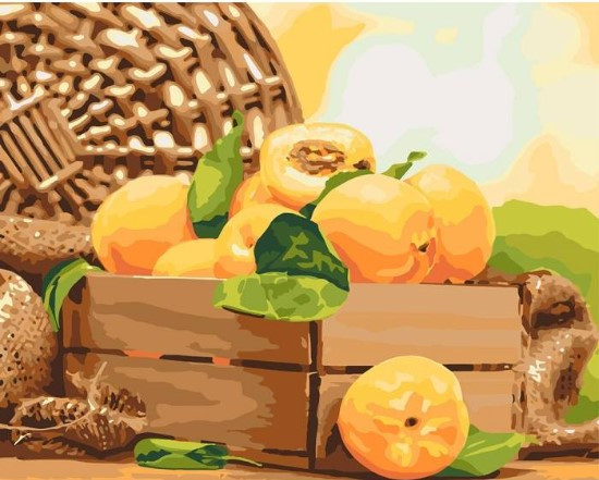 Картина по номерам Золотистый абрикос