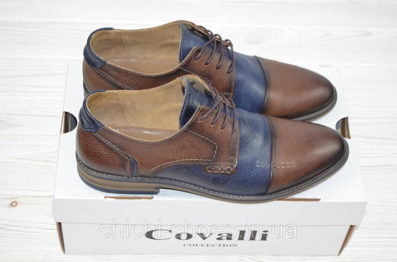 Туфли мужские Covalli 17-6 сине-коричневые кожа на шнурках