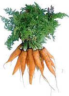 Морковь Каротан Оранжевый Семена Florium