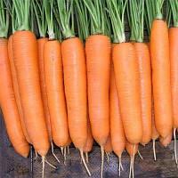 Морковь Сиркана Оранжевый Семена Florium