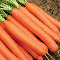 Морковь Карлена Оранжевый Семена Florium