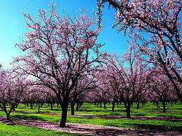 Весна в вашем саду