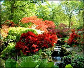 azalea_rododendron_1.jpg