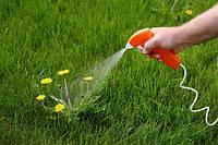Инсектициды для защиты овощных культур и декоративных растений
