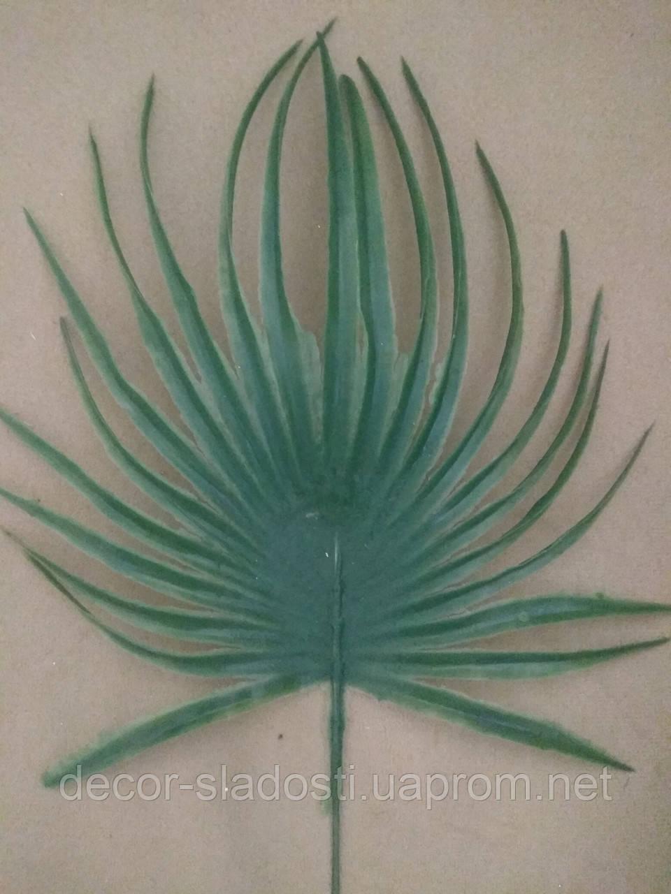 Лист пальмы