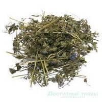 Вероника лекарственная трава 100 грамм