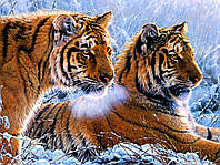 Алмазная вышивка на подрамнике 40 х 50 см Тигры в снегу (арт. TN939)