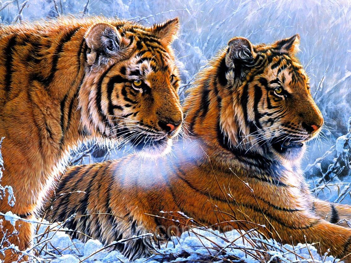 Алмазна вишивка на підрамнику Пара тигрів взимку 40 х 50 см  (арт. TN939)