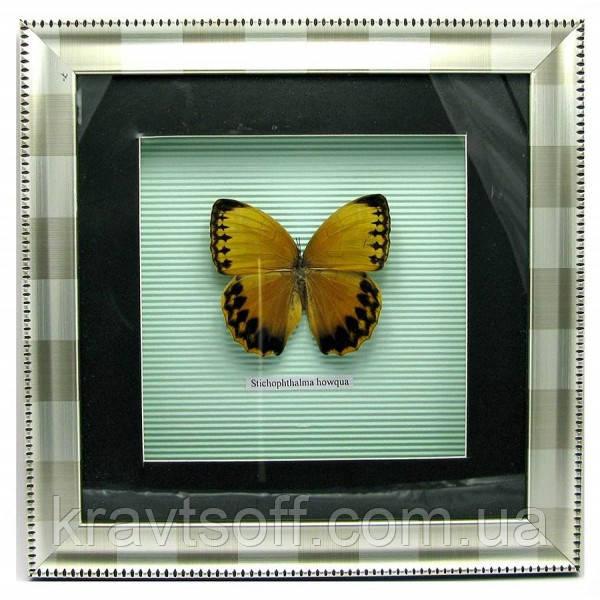 Бабочка в рамке (30х30 см) (18586)