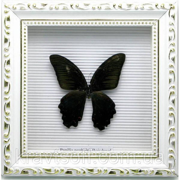 Бабочка в рамке (21х21х4 см) (19859)