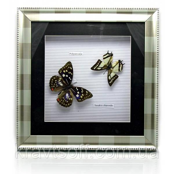 Бабочки в металлической рамке (30х30х4 см) (19855)