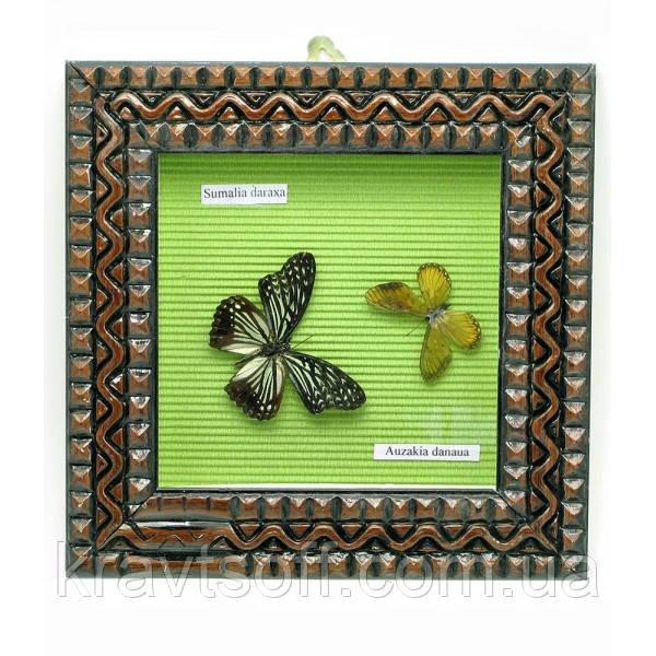 Бабочки в рамке (22х22х4 см) (23012)