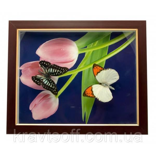 Бабочки в рамке (28х23х2,5 см) (24401)