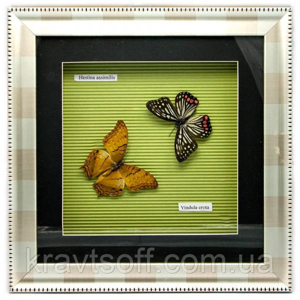 Бабочки в рамке (30х30х3,5 см) (23843)