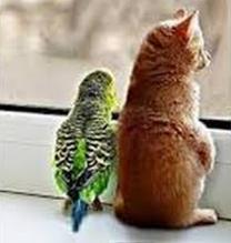 Временная передержка животных и птиц.
