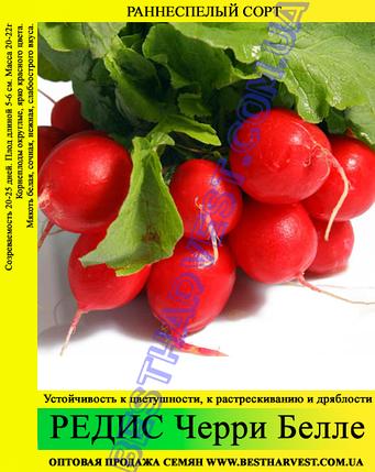 Семена редиса Черри Белле 1кг, фото 2