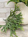 Травка декоративна, h-32 см ,(35\30) (ціна за 1 шт. + 5 гр.), фото 3