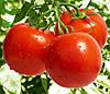 Семена томата Джампакт F1 1000 сем. Саката.