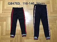 Спортивные штаны на меху для девочек оптом, Grace, 116-146 см,  № G84763