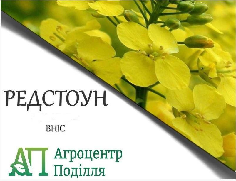 Рапс озимый РЕДСТОУН РС  300-305 дн. бесплатная доставка урожай 2020 г.