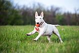 Collar Liker Cord -м'яч іграшка для собак 9см, фото 3