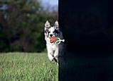 Игрушка для собак Liker Lumi Мячик со светонакопительным шнурком 7см, фото 2