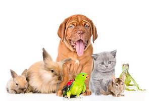 Товари для домашніх тварин і птахів