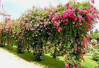 Опоры для цветов и растений Polyarm Ø 14 мм (2 метра)