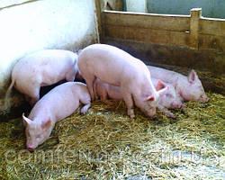 """Комбикорм для поросят """"Гровер"""" весом от 30-65 кг, на основе натуральных продуктов"""