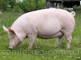 """Комбікорм для поросят """"Фінішер"""" вагою від 65 -110 кг, на основі натуральних продуктів"""