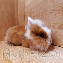 """Миниатюрный торчеухий кролик,порода """"Львиная голова"""",возраст 1,5мес.,девочка, фото 3"""