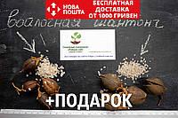 Комплект семян павловния войлочная (адамово дерево) + гибрид Шан Тонг (шантонг, ShanTong) (2500 + 1000 семян), фото 1